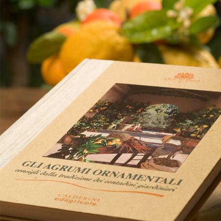 Il calendario della chioccia cocca oscar tintori gli for Calendario concimazione agrumi