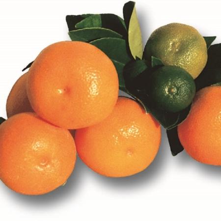 Calamondini - Citrus Madurensis/Citrus Mitis