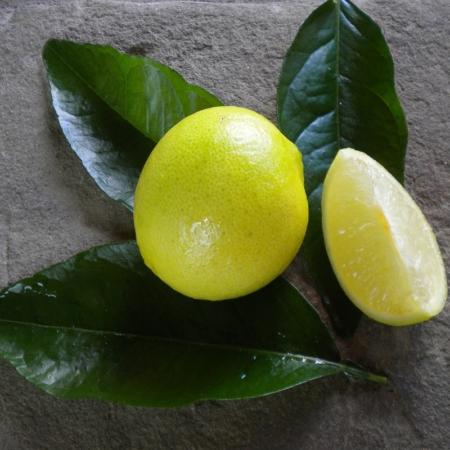 Limette - Citrus Aurantifolia