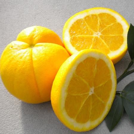 Citrange-Citrangequat e ibridi di Citrange