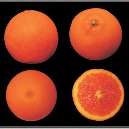 Arancio dolce tarocco tapi